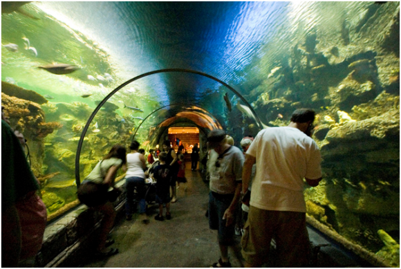 Shark Reef, Nevada ( creative commons)